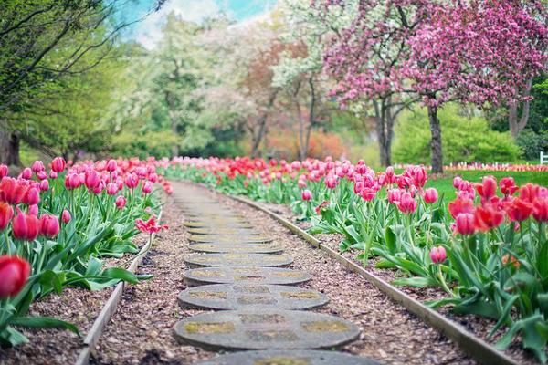 Płytki chodnikowe to element aranżacji ogrodu