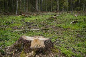 Tanie wycinanie niepotrzebnego drzewa