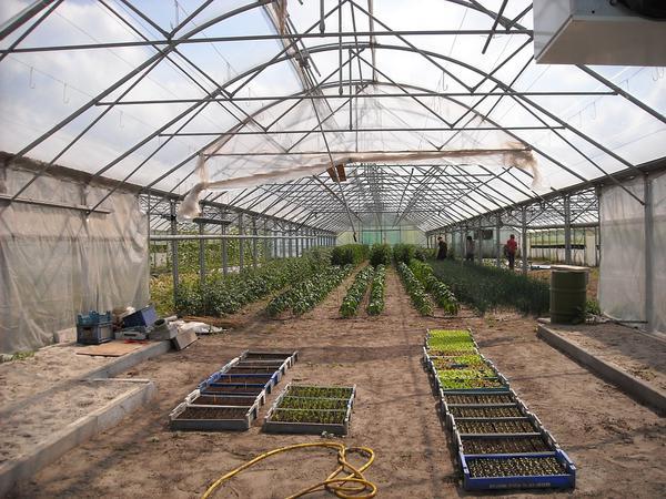 Zastosowanie folii ogrodniczej do budowy tuneli