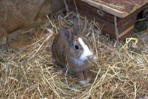 Wybór klatki dla królika